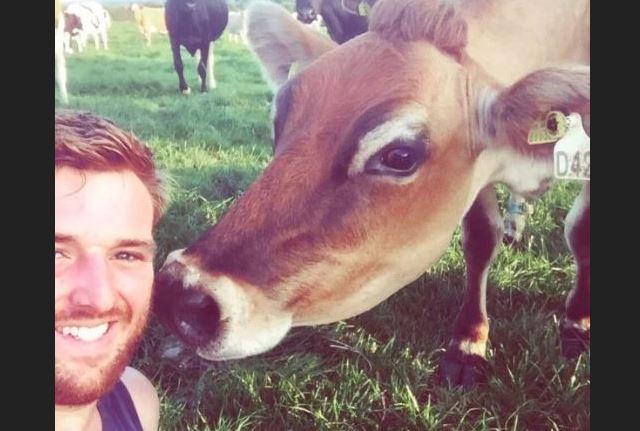 vaca mas sexy