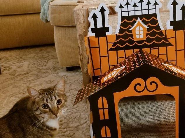 casas para gatos de Halloween