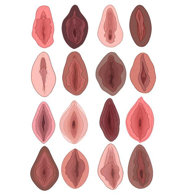 museo de la vagina