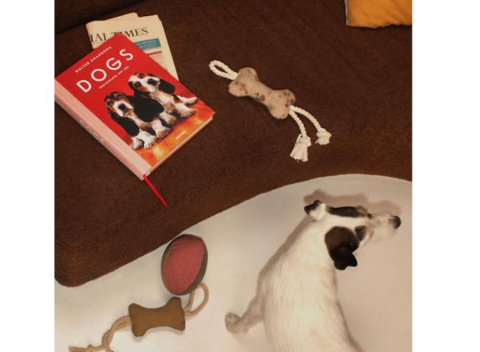 mascotas accesorios