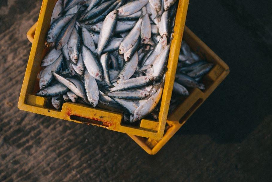 pescadería online